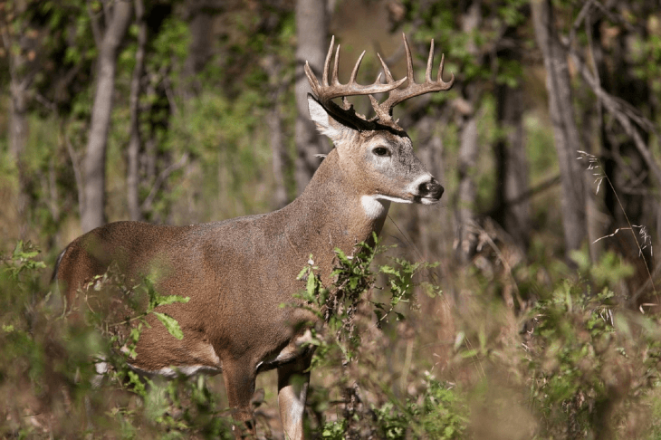 The Best Deer Feeder: Our Gravity, Tripod, and Hanging